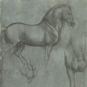 Leonardo da Vinci, Royal Collection, Windsor, c. 12321r/P92r Studio di cavallo visto di lato, di fronte e di tre quarti