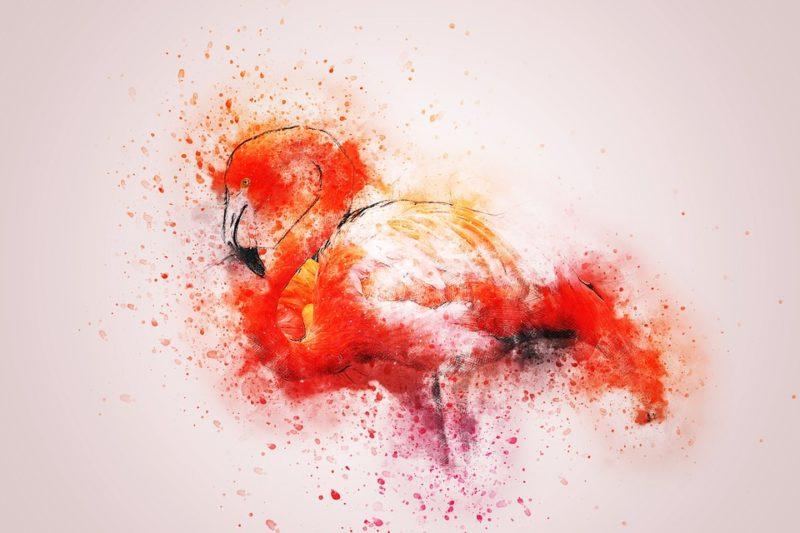 flamingo-2416343_960_720