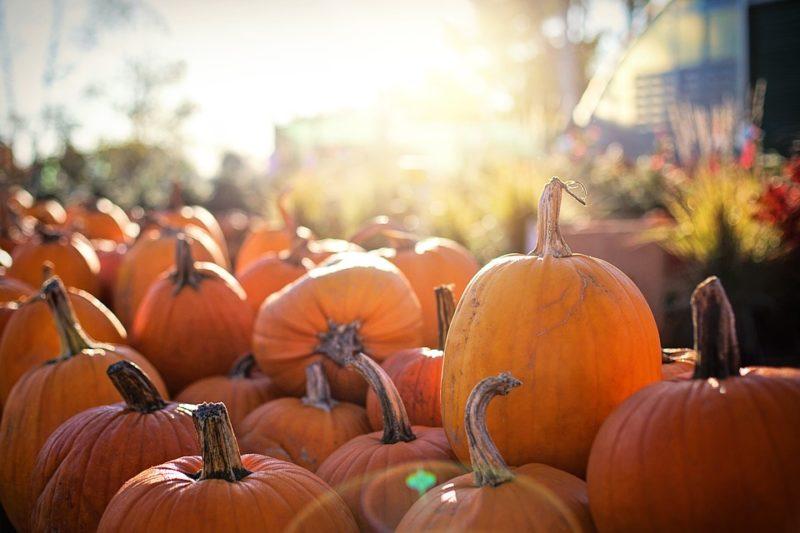 pumpkins-2871265_960_720