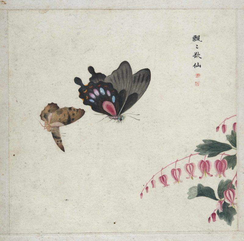 Anonimo, Farfalla con germogli - Album insietti, erbe, fiori e piante - Cina, 1910 ca - Dalla Collezione della famiglia Calamandrei - Montepulciano