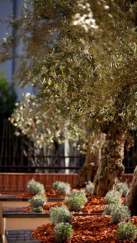 Il giardino provenzale