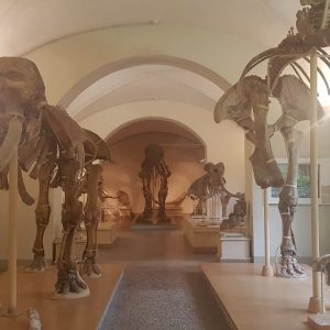 Museo online