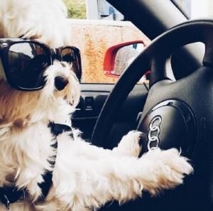 vita da cani, cani ricchi, cani viziati, cani su instagram, cani famosi, cani famosi su instagram,